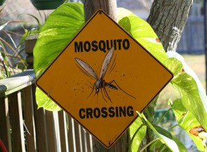 Mosquito vacation rental